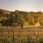 Santa Barbara Wine Country Tours